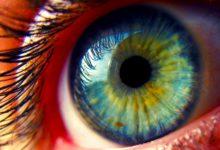 Photo of Глаза человека — это сложный оптический прибор